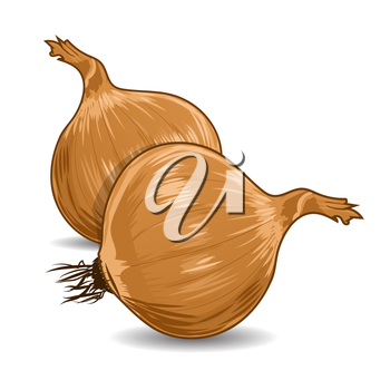 Hand drawn onion over white background. Vector illustration