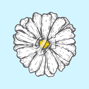 chamomile isolated on blue background. Simple botanical illustrations. Hand drawn sketch of flower