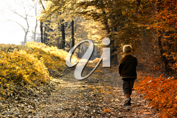 A young child walking in forest - autumn season