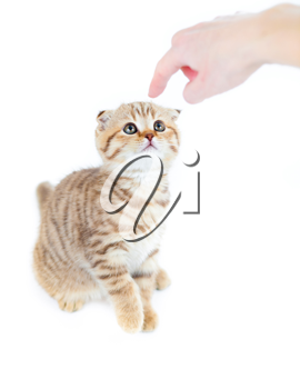 Royalty Free Photo of a Person Pointing at a Kitten