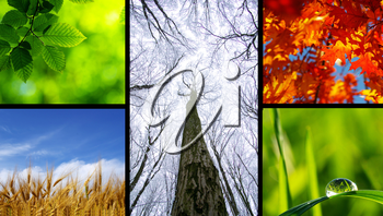 Assembling of beautiful seasonal pictures of nature
