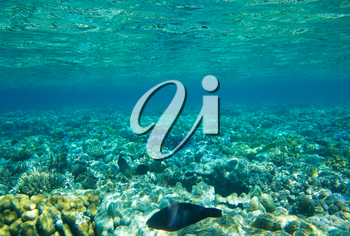 Underwater panorama with fish and coral