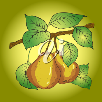 Royalty Free Clipart Image of Pears on a Branch