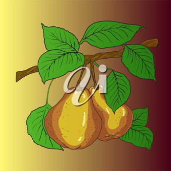 Royalty Free Clipart Image of Two Pears