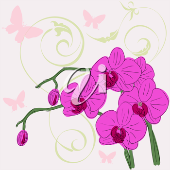 Royalty Free Clipart Image of Orchids