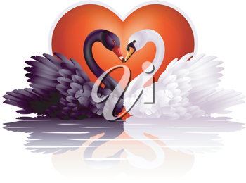 Royalty Free Clipart Image of a Couple of Swans