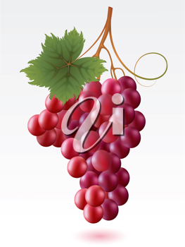 Royalty Free Clipart Image of a Grapes