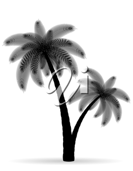 palm tree black outline silhouette vector illustration isolated on white background