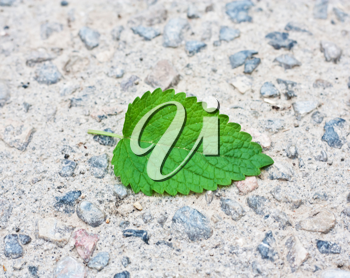 green leaf from a tree on a stone background