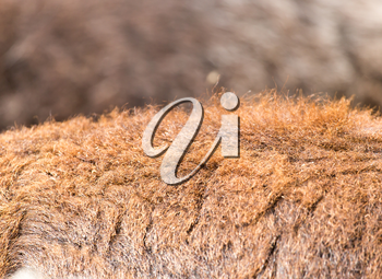 background made of wool sheep