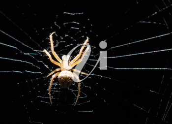spider on the web at night