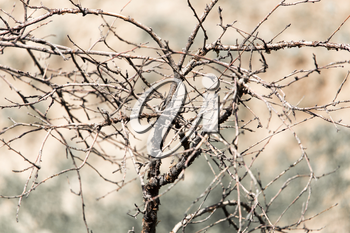 dry branch of a tree in nature