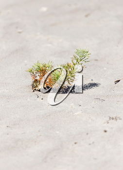 a plant in the sand