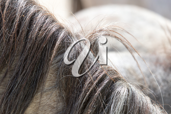 background of the horse's mane
