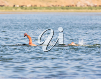 a man swimming in a lake