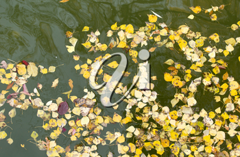 yellow leaves on the surface of the water in the fall