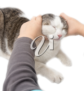 weasel cat hands on a white background