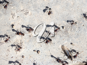 Ants on the ground in nature. macro