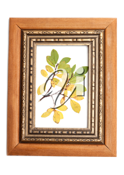Royalty Free Photo of Leaves in a Picture Frame