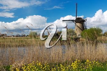 Kinderdijk windmill on a background of yellow flowers.
