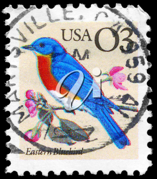 Royalty Free Photo of 1996 US Stamp Shows the Eastern Bluebird, Flora and Fauna