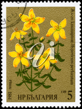 BULGARIA - CIRCA 1981: A Stamp printed in BULGARIA shows image of a St. John's wort, with the description Hypericum perforatum, from the series Medicinal herbs, circa 1981