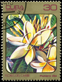 CUBA - CIRCA 1984: A Stamp printed in CUBA shows image of a Plumieria alba, from the series Caribbean Flowers, circa 1984