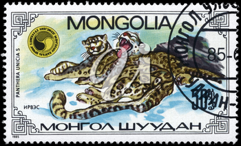 MONGOLIA - CIRCA 1985: A Stamp printed in MONGOLIA shows image of a running Leopards, with the description Panthera unicias, series, circa 1985