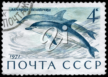USSR - CIRCA 1971: A Stamp printed in USSR shows image of a Common Dolphin from the series Sea Mammals, circa 1971