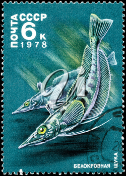 USSR - CIRCA 1978: A Stamp printed in USSR shows image of a Whiteblooded Pikes from the series Antarctic Fauna, circa 1978