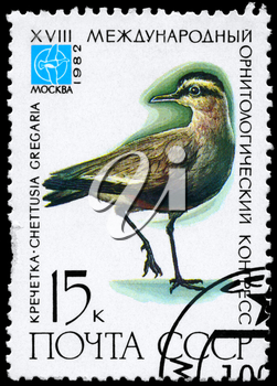 USSR - CIRCA 1982: A Stamp printed in USSR shows image of a Sociable Lapwing with the inscription Chettusia gregaria from the series Rare Birds devoted 18th Ornithological Cong., Moscow, circa 198