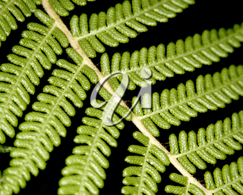 Royalty Free Photo of a Fern