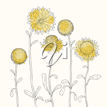 Royalty Free Clipart Image of Yellow Sunflowers