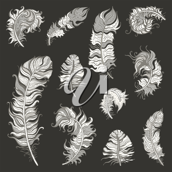 Vintage Feather vector set. Hand drawn illustration.