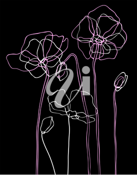 Pink poppies on black background. Vector illustration