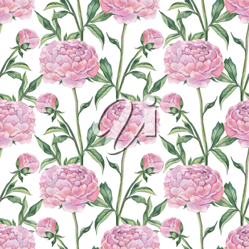 Peonies, seamless pattern. Hand painted Watercolor botanical illustration