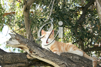 Royalty Free Photo of a Cat in a Tree