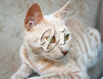 Royalty Free Photo of a Cat
