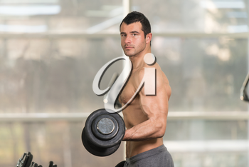Handsome Hairy Man Working Out Biceps In A Fitness Center Gym - Dumbbell Concentration Curls