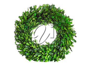 Wreath made with real natural green boxwood leaves isolated on white background.