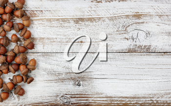 Autumn decorations with real acorns on white rustic wooden boards for Halloween or Thanksgiving holiday concept
