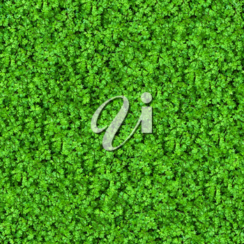 Green Meadow Grass. Seamless Tileable Texture.