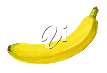 Banana. Isolated on a white background. Watercolor handwork illustration of tropical fruit. Hand drawn painting with yellow green white dominant color