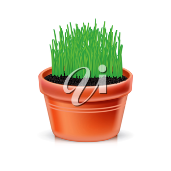 clay pot with growing grass isolated on white