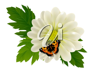 flower and butterfly isolated on white background