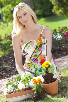 Beautiful blond woman gardening planting flowers and tomato plants in pots in the garden