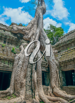 Big Banyan Tree Growing Over Ta Prohm Temple, Angkor Wat, Cambodia, Southeast Asia