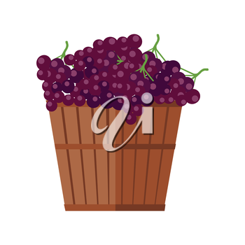 Wooden basket with grapes. Red vine. Fruit for preparation check elite vintage strong wine. Bunch or cluster of grapes. Grapery racemation. Part of series of viniculture production items. Vector