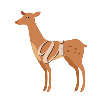 Fawn isolated on white. Junior verdant young brown spotted deer. Ruminant mammals forming family Cervidae. Little inexperienced fawn in its first year. Cartoon illustration. Herbivore creature. Vector