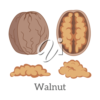 Illustration of walnut kernels. Ripe walnut kernels in flat. Several brown walnut. Healthy vegetarian food. Isolated vector illustration on white background.
